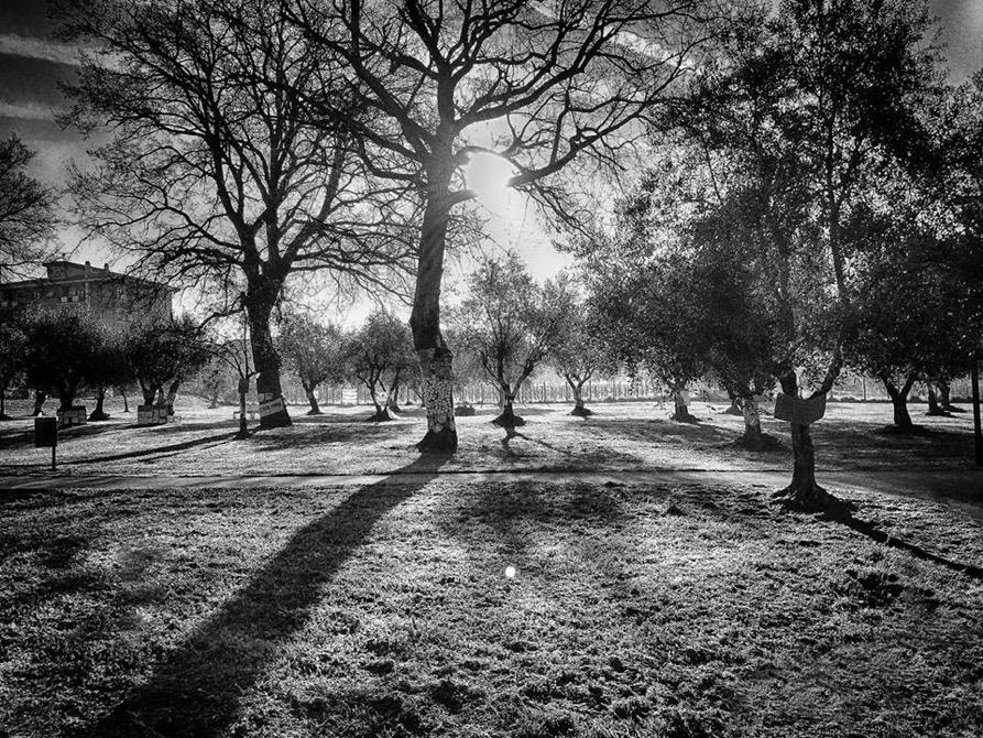 parco delle querce viterbo 3