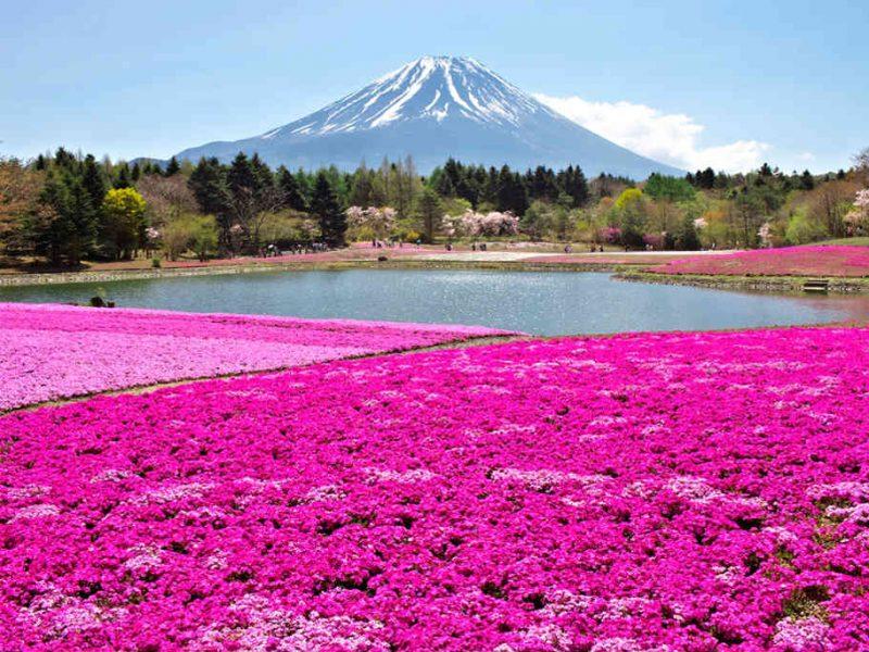 Giappone-Fuji-Shibazakura-Festival